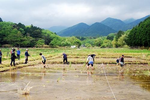 第一回 大正田マコモオーナー制度「田植祭」