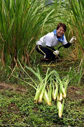 大正田マコモオーナー制度「収穫祭」